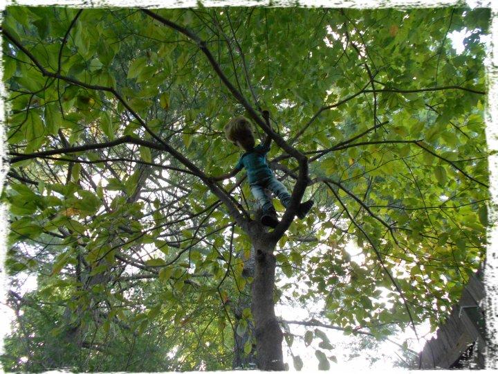 charlies_tree3 (1)